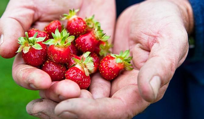 bouley-farm-strawberrries-670-photo-Nicole-Bartelme-(c)2011